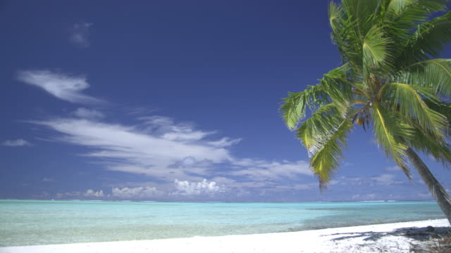ms, palm swaying at sandy tropical beach, aitutaki lagoon, aitutaki, cook islands - litorale video stock e b–roll