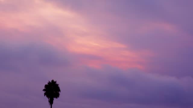 palme gegen einen rosa und lila himmel - kontrastreich stock-videos und b-roll-filmmaterial