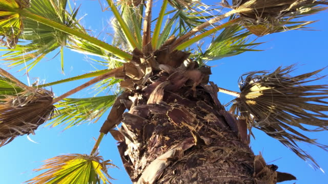 palm tree against blue sky - tropical tree stock videos & royalty-free footage