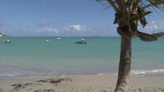 vidéos et rushes de palm tree and boats and beach at la datcha, le gosier, pointe-a-pitre, guadeloupe, french antilles, west indies, caribbean, central america - guadeloupe