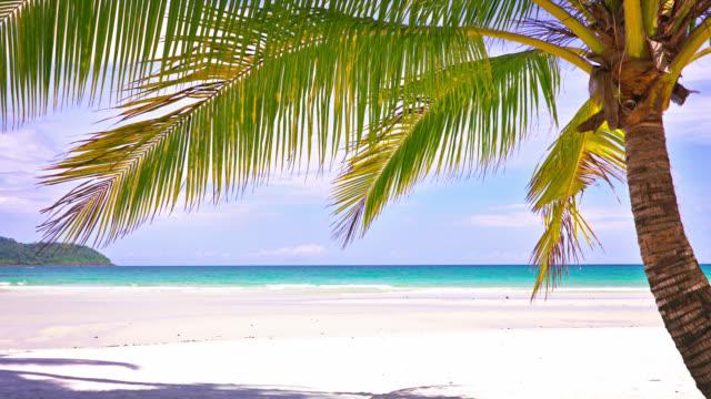 palme und leerer strand. konzept der entspannung. - lagune stock-videos und b-roll-filmmaterial