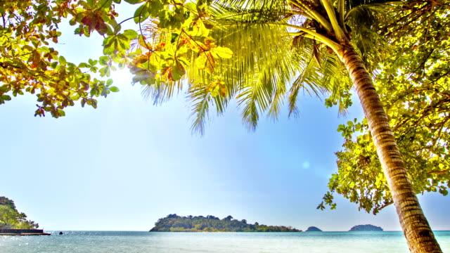 Palm tree and island