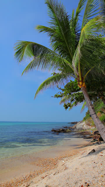 palm tree and sea - tropical tree stock videos and b-roll footage