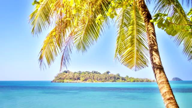 Palm tree and tropical island