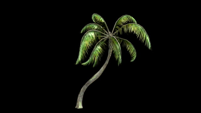 palm tree animation - palm tree stock videos & royalty-free footage