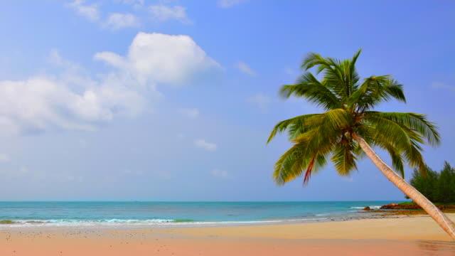 ビーチに立つヤシの木