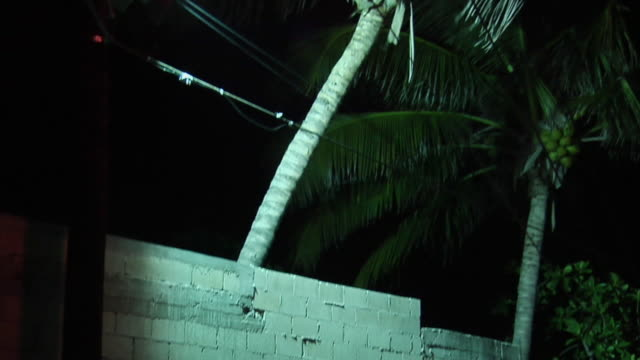 ms tu palm tree at night, isla mujeres, quintana roo, mexico - quintana roo stock videos and b-roll footage