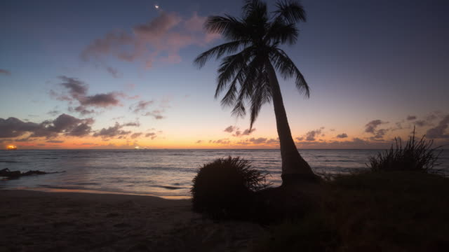 palm tree at sunset in micro beach / saipan, northern mariana islands, united states - palm leaf stock videos & royalty-free footage