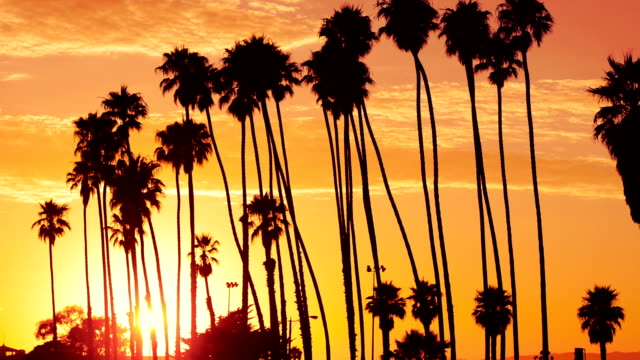 stockvideo's en b-roll-footage met palm tree at sunset on california - usa - beverly hills californië