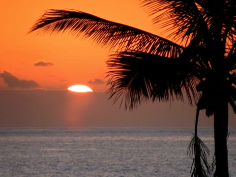 pal: palm tree at sunset - other stock videos & royalty-free footage