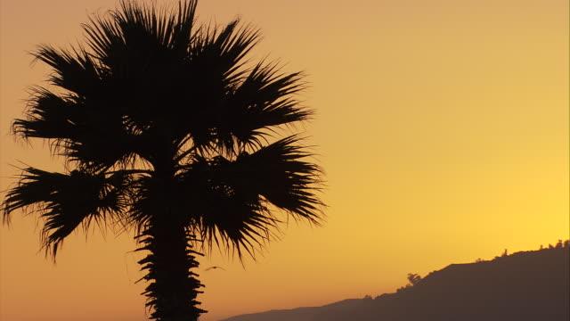 cu palm tree at sunset with birds flying through frame / malibu, california, united states. - malibu stock videos & royalty-free footage