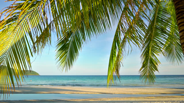 palm tree at the tropical beach - tropical tree stock videos & royalty-free footage