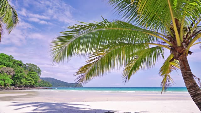 palm tree at tropical beach - idyllic stock videos & royalty-free footage