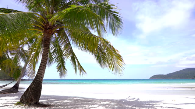 palm tree at tropical island - caribbean sea stock videos & royalty-free footage