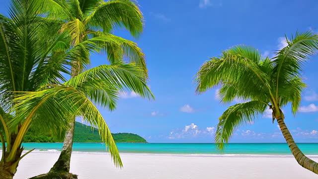 パームトリーのビーチ - 熱帯気候点の映像素材/bロール