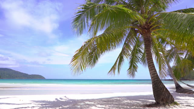 palm tree beach - isole del pacifico video stock e b–roll