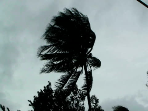 palm tree blowing in strong winds in cupang, 20km se of manila, philippines, typhoon mirinae 2009 - 強風点の映像素材/bロール