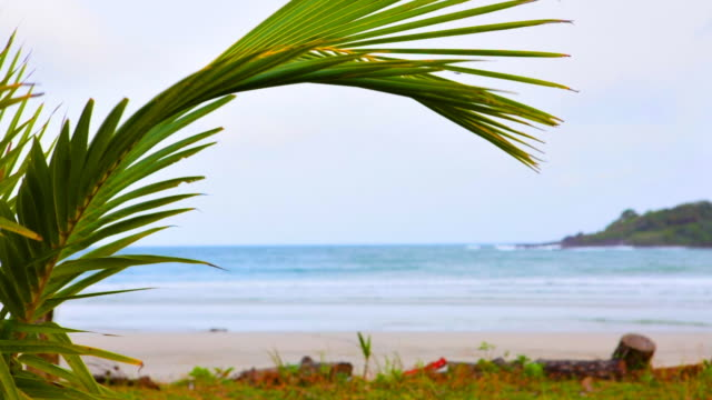 Palm tree branch with sea background