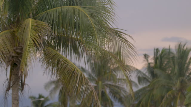 palm tree foliage in strong wind - ココナッツ点の映像素材/bロール