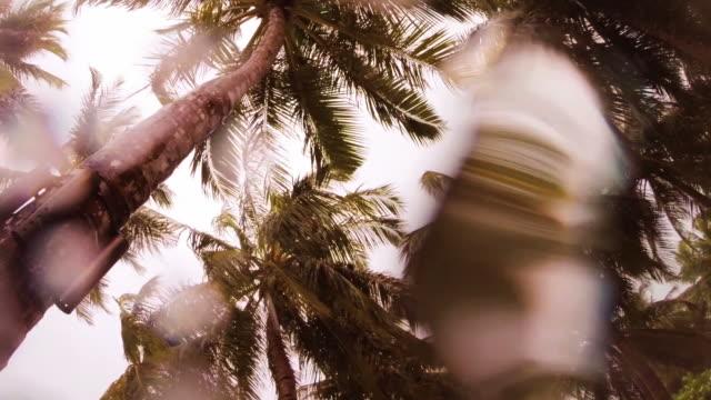 Palm tree forest during rainy season