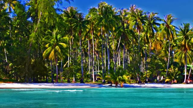 vídeos de stock, filmes e b-roll de floresta de palmeiras na praia perto de água do mar - árvore tropical