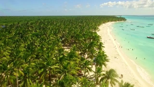 ヤシの木の森 - ドミニカ共和国点の映像素材/bロール
