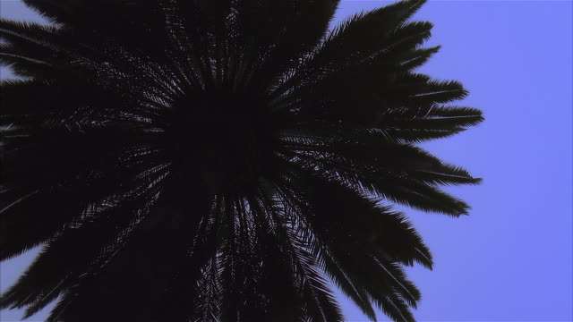 view from below palm tree fronds - fan palm tree stock videos & royalty-free footage