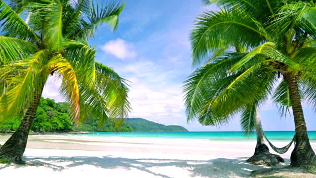 海にパーム ツリー ゲート。熱帯のビーチ - 静かな情景点の映像素材/bロール