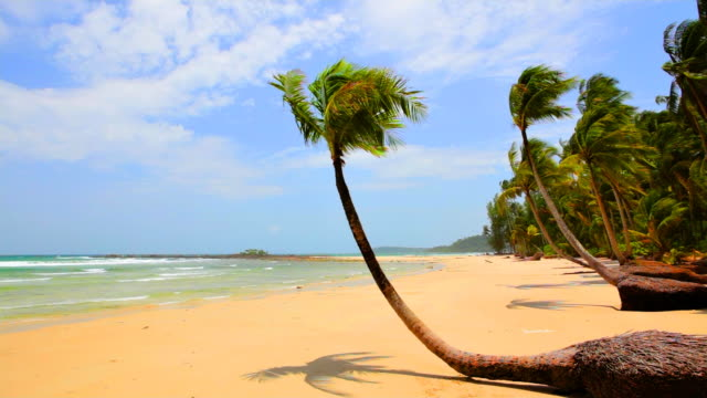 palm tree grove on the tropical beach - tropical tree stock videos & royalty-free footage