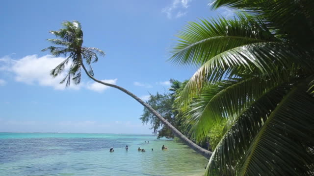 palm tree h - french overseas territory stock videos & royalty-free footage