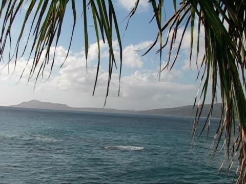 vidéos et rushes de palm tree est accroché sur une vue sur l'océan - fronde