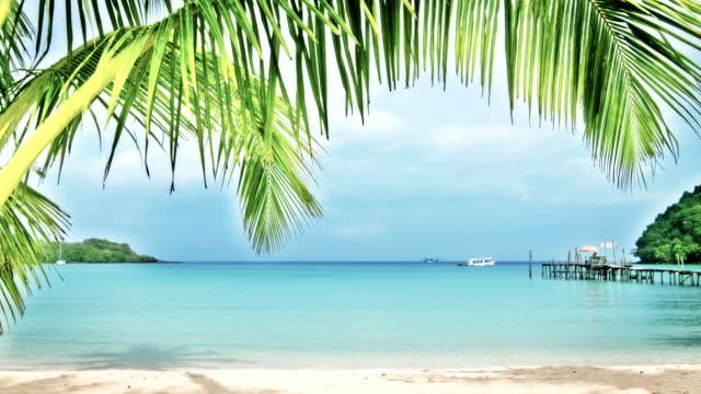 Palm Tree hänger över Aqua vatten strandlinjen