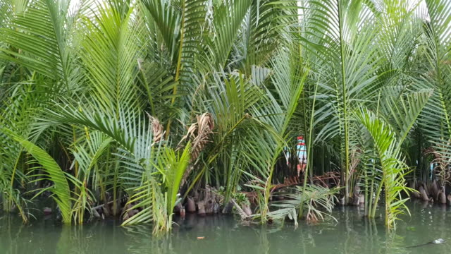palm tree in canal - mangrove forest stock videos & royalty-free footage