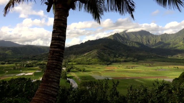 palm tree in front of large valley at base of mountain on kauai island - butte rocky outcrop stock videos & royalty-free footage