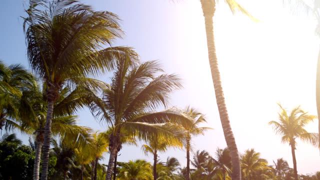 vídeos y material grabado en eventos de stock de palmera en el paraíso - palmera