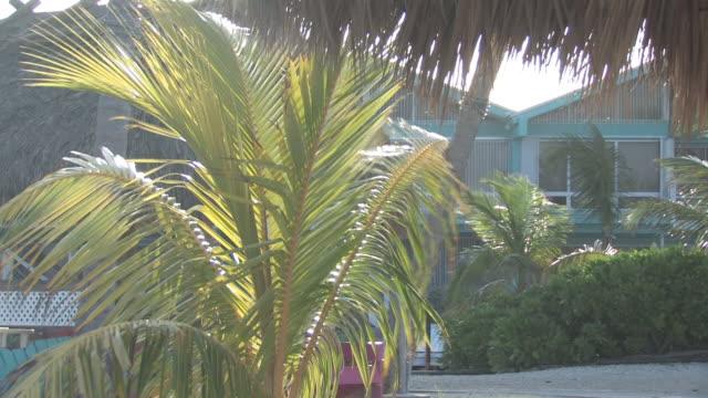 vídeos de stock e filmes b-roll de palmeira no vento-hd 30f - oscilar