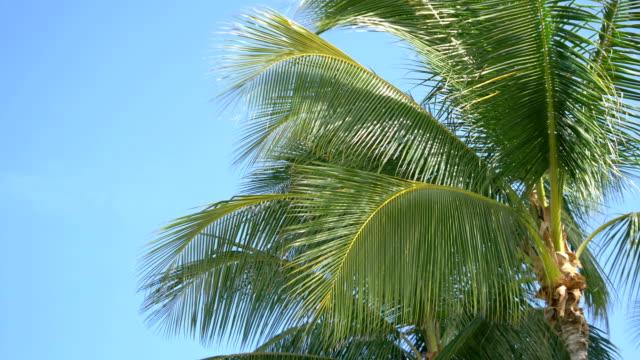 Palm tree Leaf in 4K slow motion