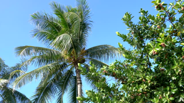 Palm tree Leaf in slow motion