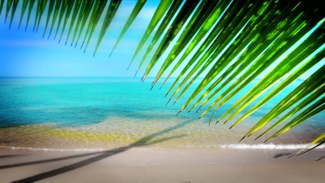 Palm tree leaf over seashore