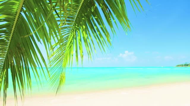 Palm tree leaf with sea background