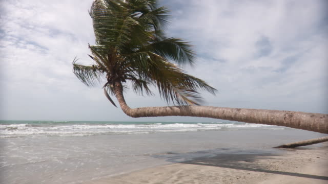 ws palm tree leaning out over ocean/ scarborough, tobago, trinidad and tobago - trinidad trinidad and tobago stock videos & royalty-free footage