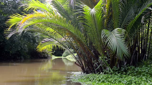 palm tree leaves and tropical plants reflecting in water