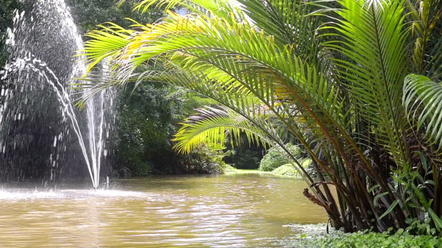 palm tree leaves and tropical plants reflecting in water - tropical tree stock videos & royalty-free footage