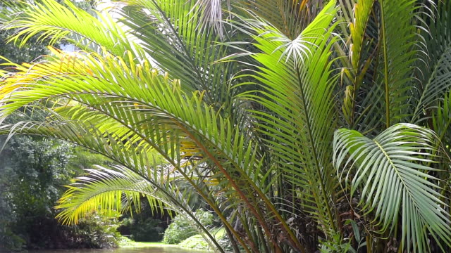 palm tree leaves and tropical plants
