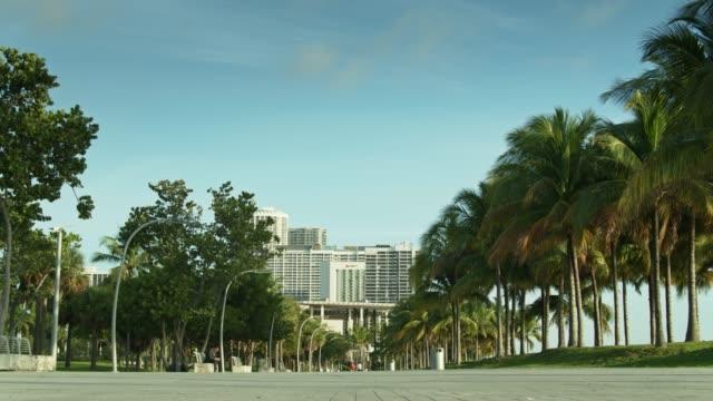 vídeos y material grabado en eventos de stock de palm tree lined path in museum park, miami - bahía de biscayne