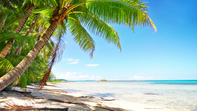 palm tree. luxuty beach. travel. holiday - caribbean sea stock videos & royalty-free footage