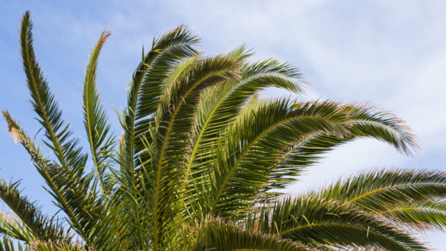 palm tree moving in the wind - mgost stock videos and b-roll footage