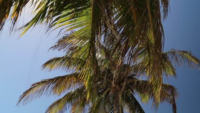 Palm Tree Moving with the Wind Against Blue Sky
