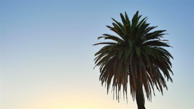 Palm tree on a blue sky in 4K