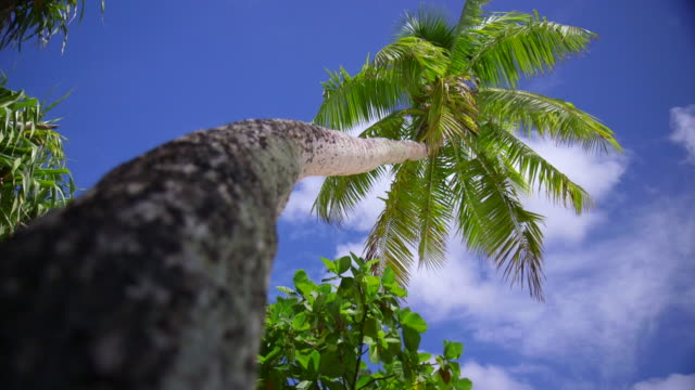 a palm tree on a scenic tropical island in fiji. - fiji stock videos & royalty-free footage